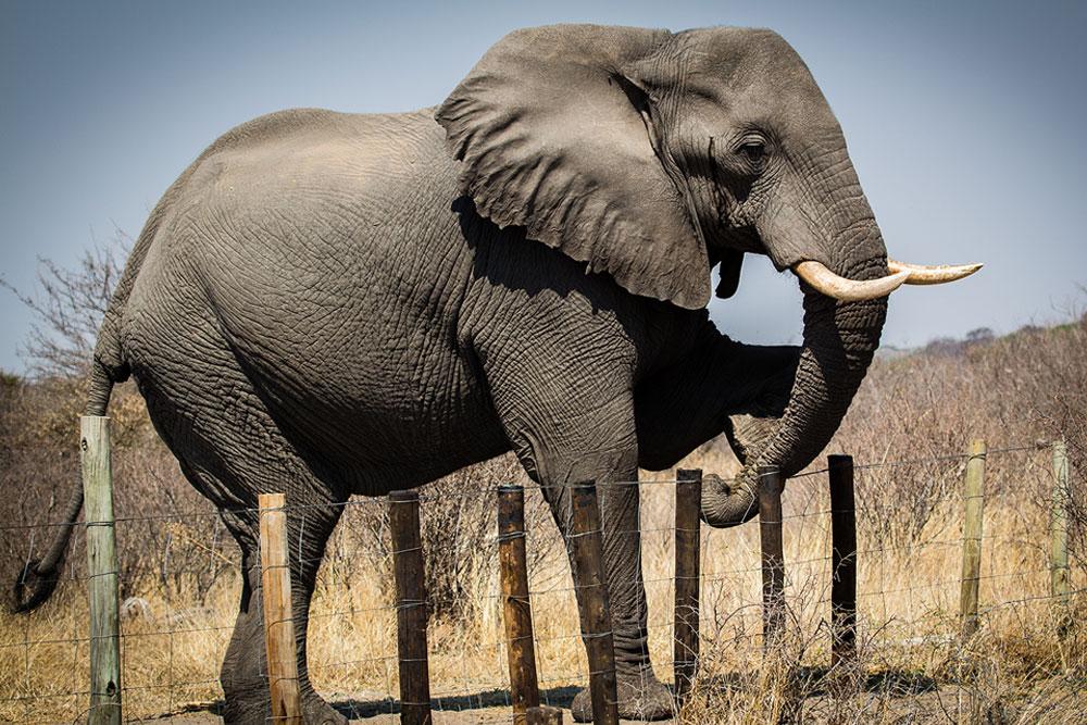 Human-wildlife conflict - Elephants For Africa
