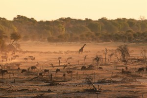 Dry dusty riverbed